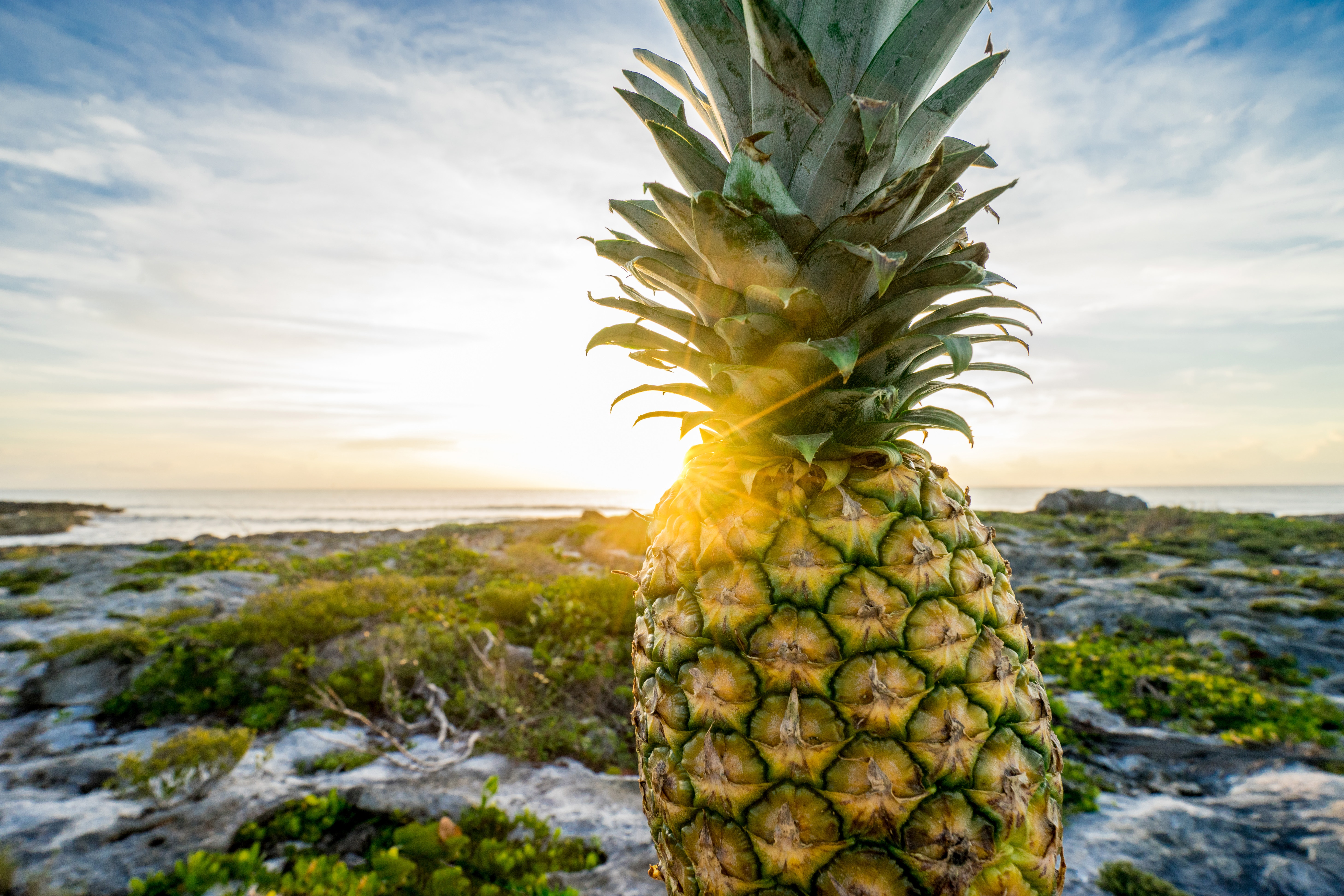 Powerful Pineapples – A True Tropical Treat